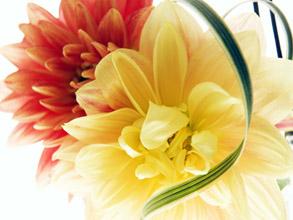 flores_ok