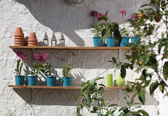 plantas-na-prateleira
