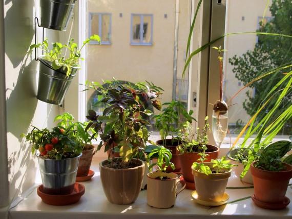 apartamento-sustentavel-horta-vertical-ecoatitude-iluminacao-janela-porto-freire-engenharia-imovel-apartamento-fortaleza