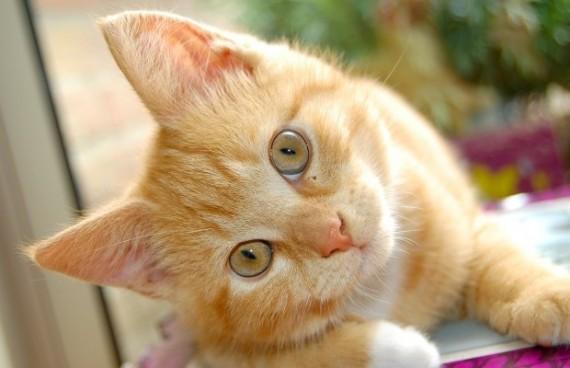 imagem-de-gato