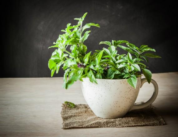 Quais são as melhores plantas para ter em apartamento?