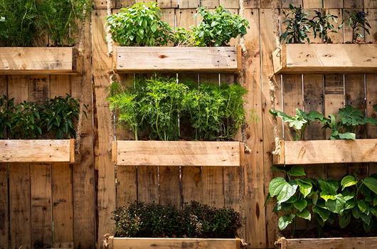 Horta em casa: Veja dicas para plantar em espaços pequenos