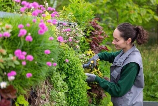 Como montar um jardim suspenso em seu lar?