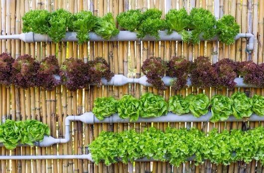 Cantinho verde: como criar uma horta no meu apartamento?