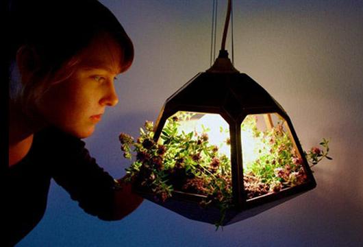 Criança admirando um mini pendente de planta para apartamento
