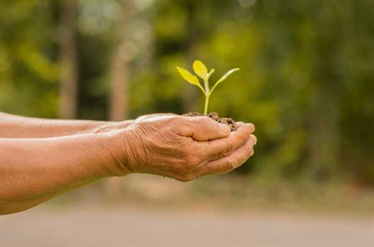 Idosa segurando muda a ser plantada próximo a um condomínio da MRV